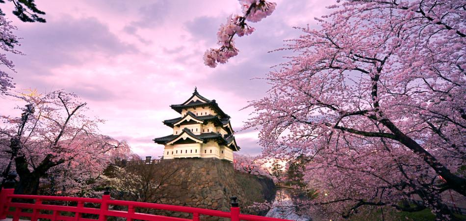 弘前城と桜 (Hirosaki Castle and cherry blossoms)